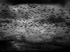 lancashire swarm of bats