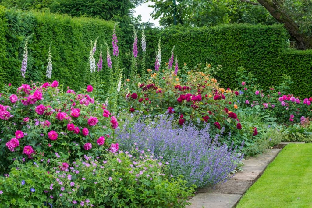 Gertrude jekyll and old roses for Gertrude jekyll garden designs